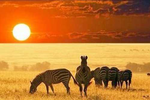 Vajes de novios Kenia